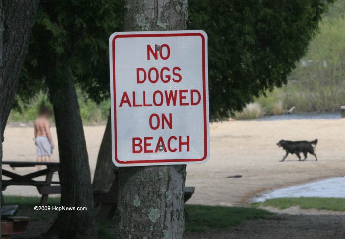 beach_no_dogs.jpg