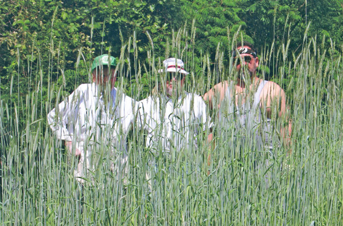 july 2 u2014 george wright bruce whyte and george robinson pose for a shot set up by george wright in field of winter rye which grew to - Winter Rye